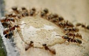 Read more about the article Voulez-vous tout savoir sur les fourmis?