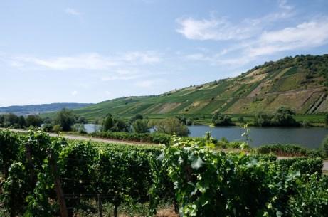 Les bords de la Moselle