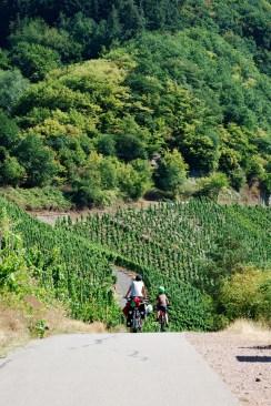 Pédalage à travers vignes