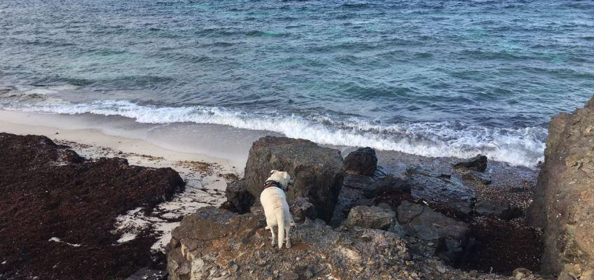 Eddy contemple le lagon
