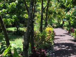 Jardin de Diamond Chocolat Factory - Grenada