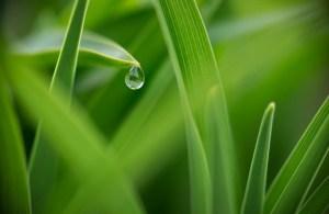 goutte d'eau sur herbes