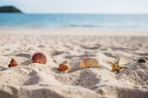 sable coquillages plage mer