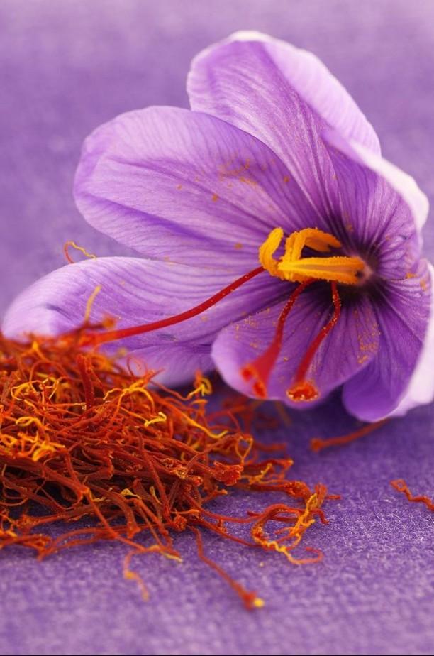 fleur de safran épice