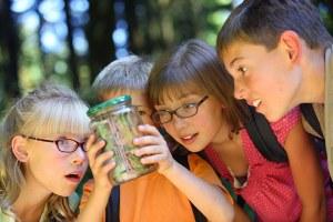 des enfants observent des insectes dans la nature lors d'un voyage scolaire