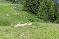 Cherche la marmotte...