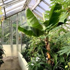Jardin botaniqueJurassica