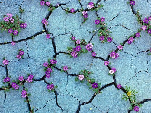 fleurs dans une fissure