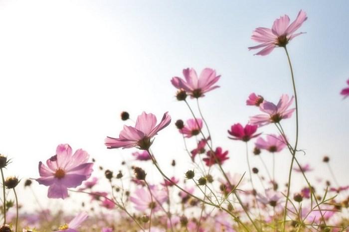 la vie cachée des fleurs et des arbres