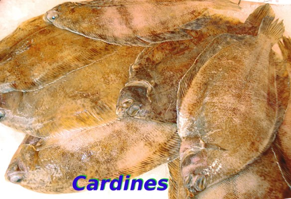 Cardines_DC_t.800