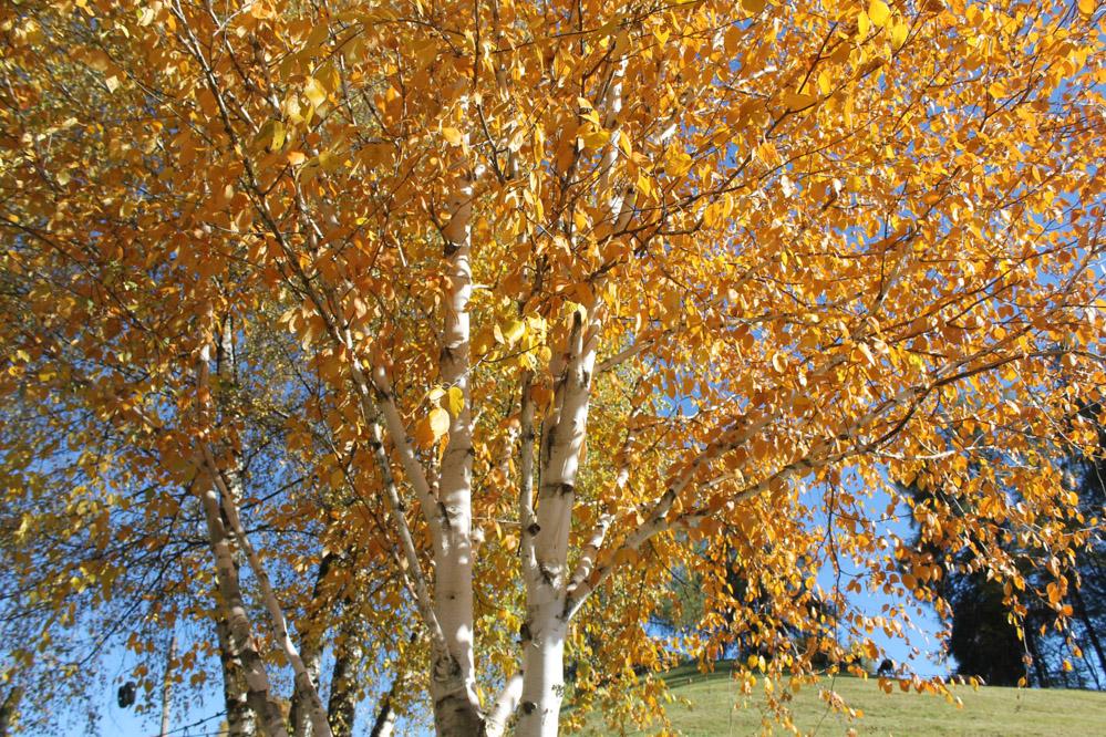 Di costine, pino mugo e alpeggio