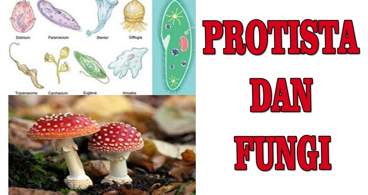 les privat surabaya - protista dan fungi