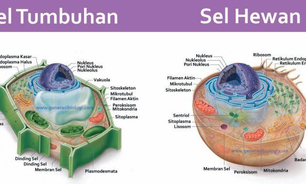 sel dan jaringan - les privat sidoarjo