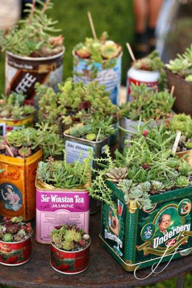 succulentes-boites-alu