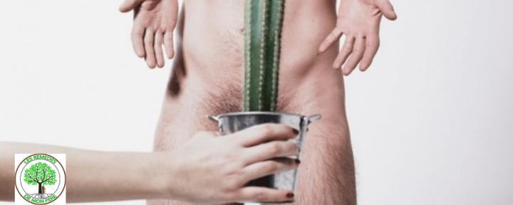 plante qui agrandit et allonge le pénis naturellement