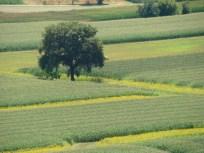photo arbres de Jean-Paul GANEM (1)