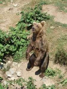 Parc national des Ours Dansants de Belitsa (Bulgarie, tourisme naturel) 6