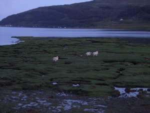 L'Ecosse en camping-car en itinérant : région d'Edimburgh 64