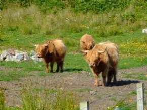 L'Ecosse en camping-car en itinérant : région d'Edimburgh 123