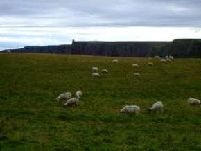 L'Ecosse en camping-car en itinérant : région d'Edimburgh 158