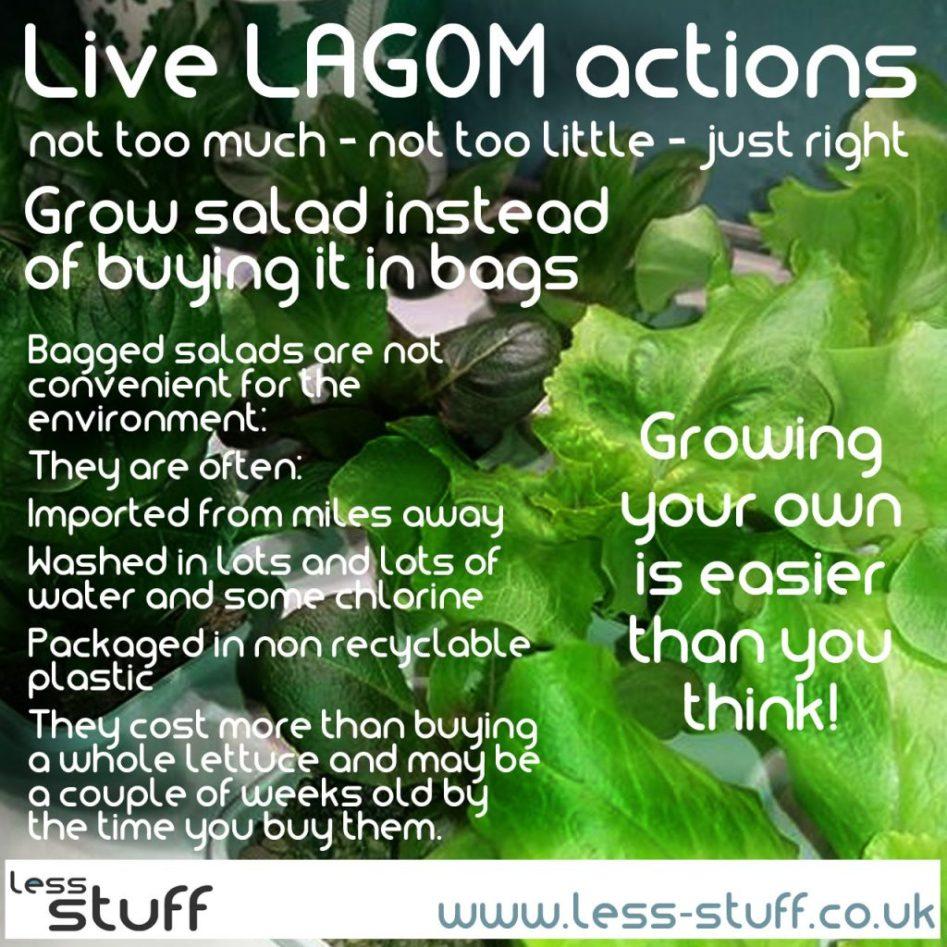 grow salad all year live lagom