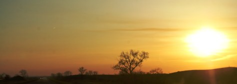Trees silhouetted in sunset east of Glasgow, MT