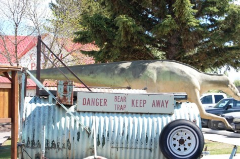 Bear Trap on display at the Old Trail Museum