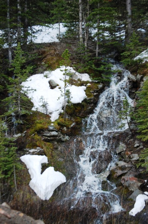 I saw numerous snow runoff formed waterfalls that fed into the raging Belt Creek. This was one of the nice ones.