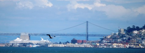 A pelican in flight over the bay