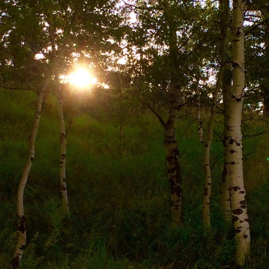 Morning sunrise in the aspens