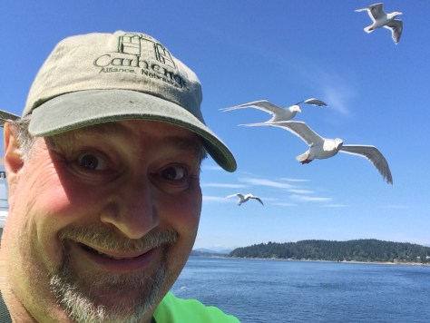 A flock of seagulls on the deck of the Hyak