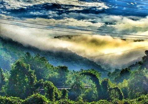 Fog in the Mountains south of Hazard, KY. The vegetation is covered with kudzu
