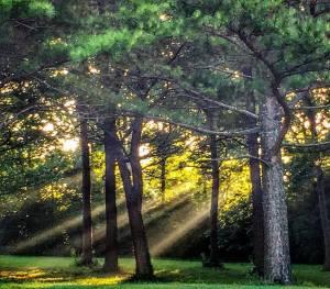 Sunbeams through the trees at Jacobson Park in Lexington, KY