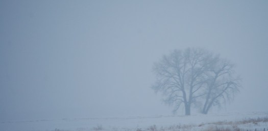 Tree in fog - northwest Minnesota as seen from I-94