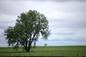 Farmland near Ravinia, SD