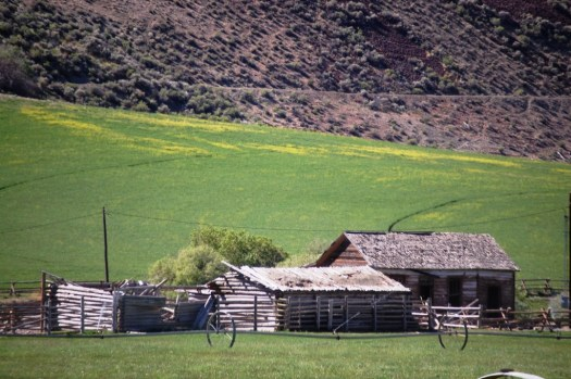 Old cabins and flowery meadow along the Salmon River Scenic Byway