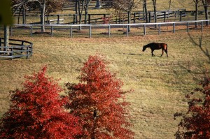 Grazing horse on a farm south of Lexington
