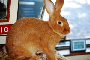 Rich Henry's Rabbit