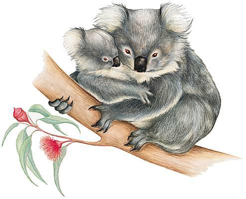 Méditation koala : respiration ventre contre ventre avec bébé