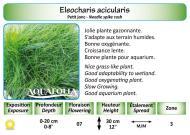 ELEOCHARIS ACICULARIS_5X7