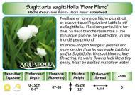 SAGITTARIA SAG FLORE PLENO_5X7