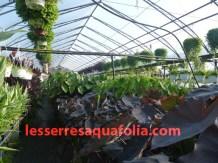 Les serres Aquafolia
