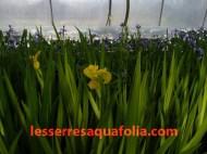 Serres Aquafolia avril 2010 024