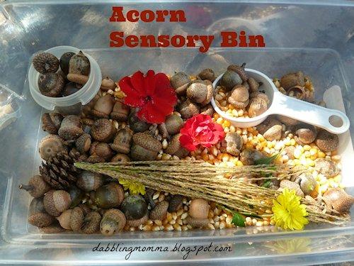 Acorn Sensory Bin