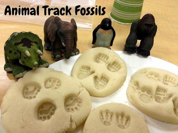 Animal Track Fossils