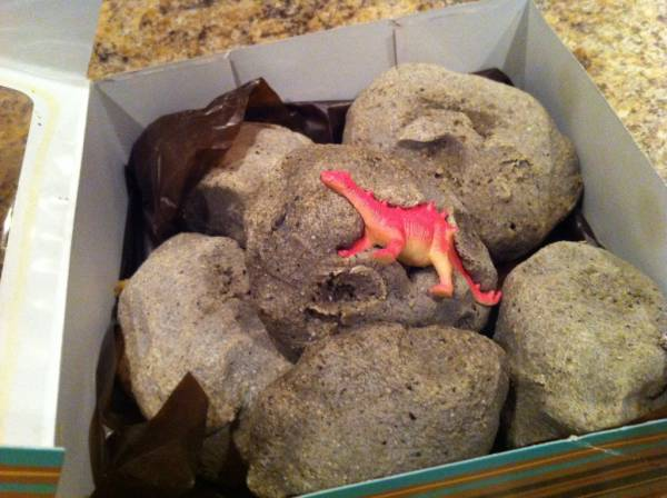 fossilrocks