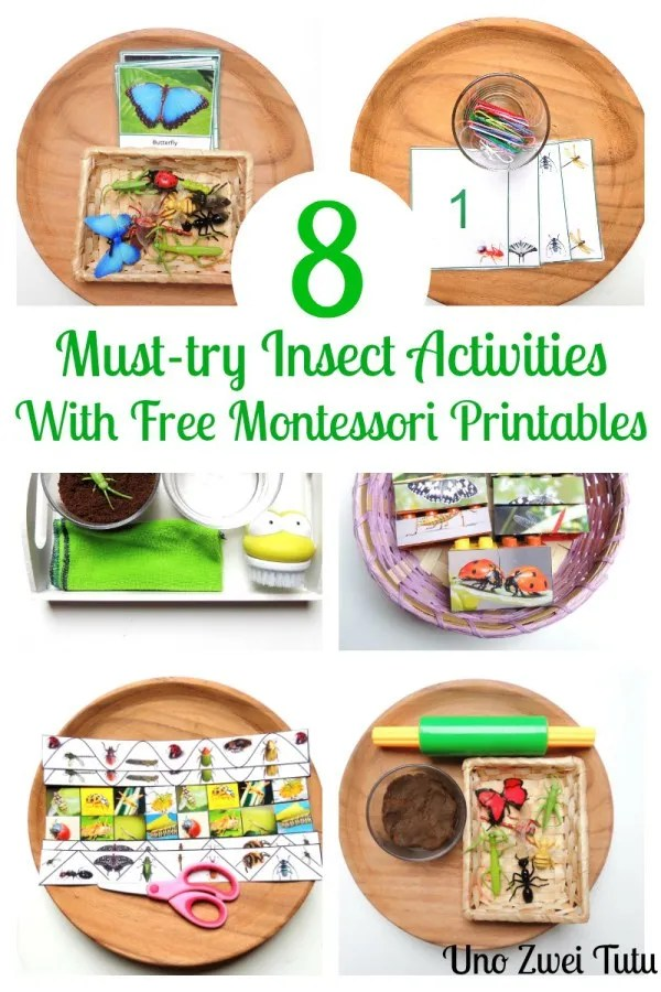 Montessori-inspired insect activities.