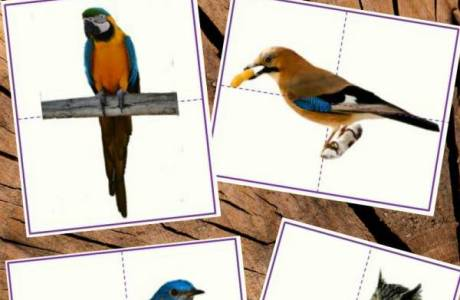 Montessori-Inspired Printable Bird Puzzles