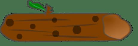 speckled log