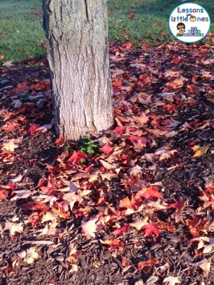 fallwalkfallenleaves